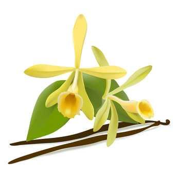 Exclusieve-kruiden-specerijen-extracten-vanille
