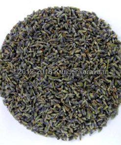 Lavendelknoppen - Provencaalse culinaire lavendel kruiden online kopen