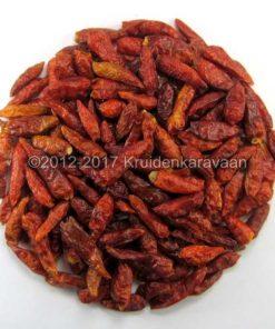 Chilies rawit - pili pili chilipepertjes online kopen (Bird's eye)