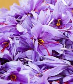 Saffraan sargol topkwaliteit - saffraandraadjes uit de Khorasan regio online kopen