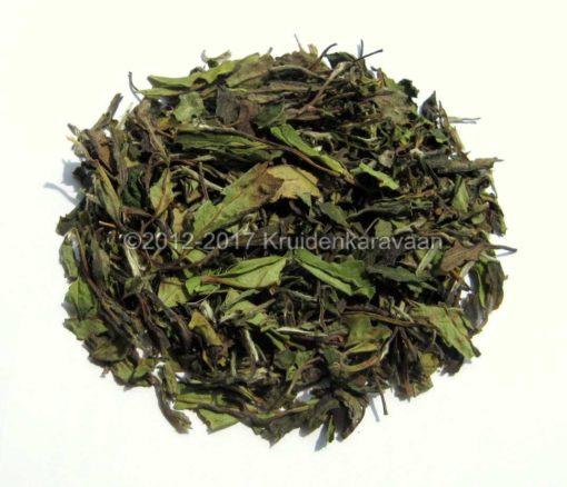 Witte thee - Pai Mu Tan thee online kopen